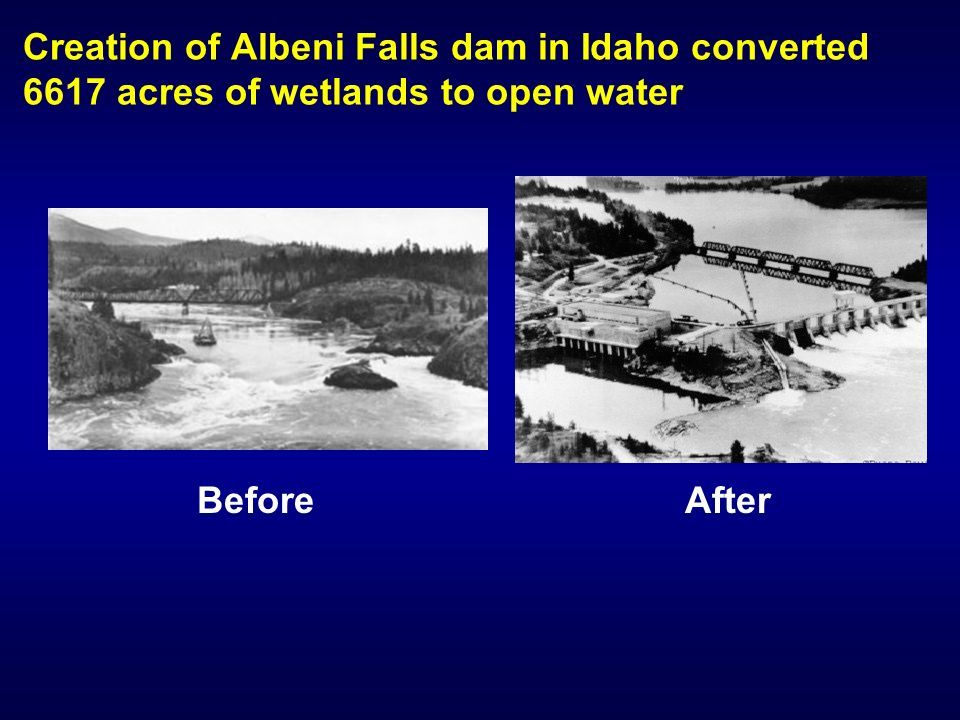 Creation of Albeni Falls dam in Idaho converted 6617 acres of wetlands to open water AfterBefore