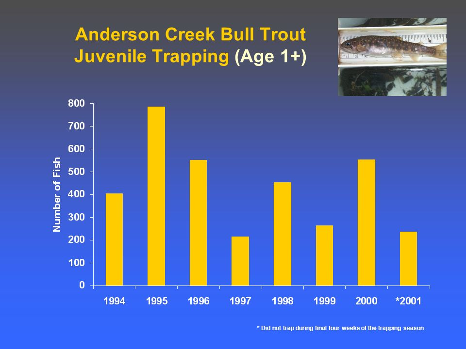 Anderson Creek Bull Trout Juvenile Trapping (Age 1+) * Did not trap during final four weeks of the trapping season