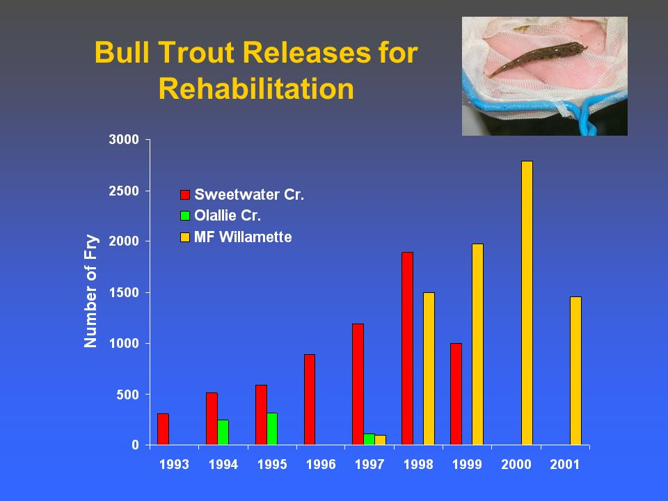 Bull Trout Releases for Rehabilitation