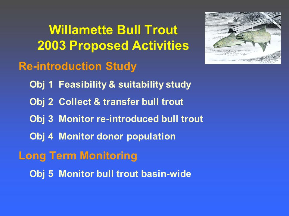 Willamette Bull Trout 2003 Proposed Activities Re-introduction Study Obj 1 Feasibility & suitability study Obj 2 Collect & transfer bull trout Obj 3 Monitor re-introduced bull trout Obj 4 Monitor donor population Long Term Monitoring Obj 5 Monitor bull trout basin-wide