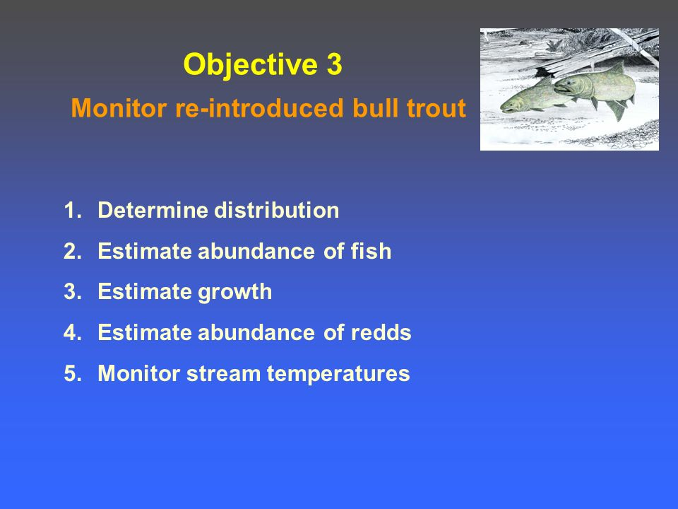 Objective 3 Monitor re-introduced bull trout 1.Determine distribution 2.Estimate abundance of fish 3.Estimate growth 4.Estimate abundance of redds 5.Monitor stream temperatures