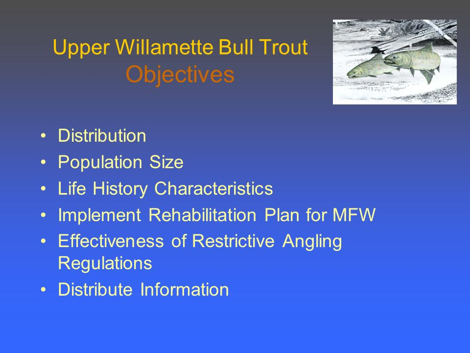 Upper Willamette Bull Trout Objectives Distribution Population Size Life History Characteristics Implement Rehabilitation Plan for MFW Effectiveness of Restrictive Angling Regulations Distribute Information