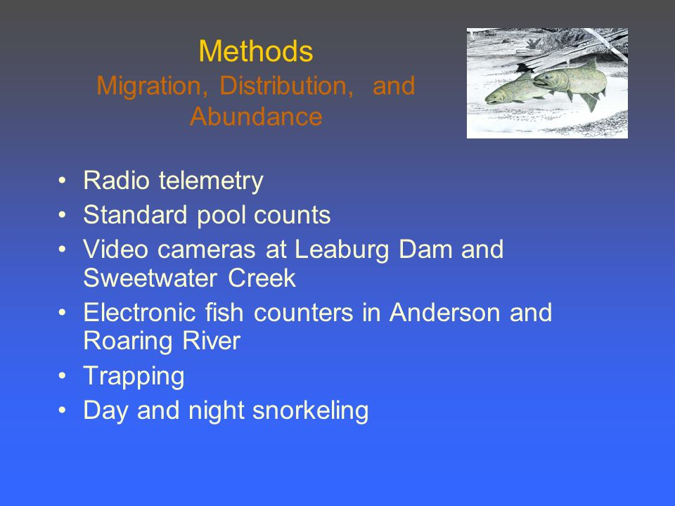 Methods Migration, Distribution, and Abundance Radio telemetry Standard pool counts Video cameras at Leaburg Dam and Sweetwater Creek Electronic fish counters in Anderson and Roaring River Trapping Day and night snorkeling