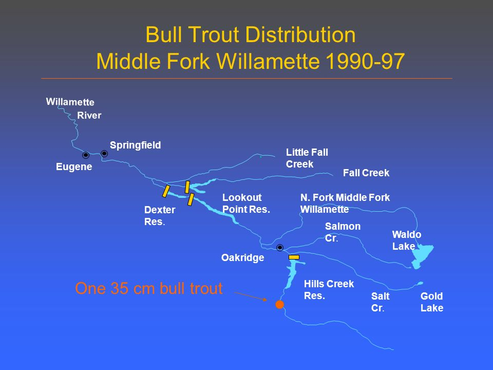 Bull Trout Distribution Middle Fork Willamette Springfield Eugene Oakridge Willamette River.