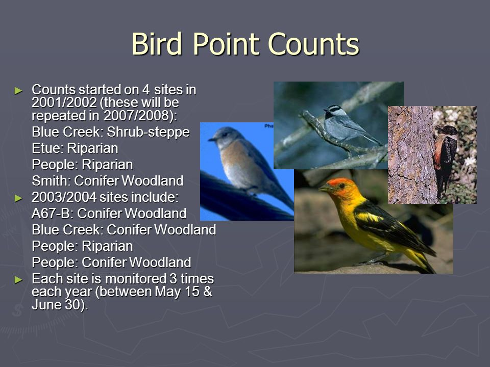 Bird Point Counts Counts started on 4 sites in 2001/2002 (these will be repeated in 2007/2008): Blue Creek: Shrub-steppe Etue: Riparian People: Riparian Smith: Conifer Woodland 2003/2004 sites include: A67-B: Conifer Woodland Blue Creek: Conifer Woodland People: Riparian People: Conifer Woodland Each site is monitored 3 times each year (between May 15 & June 30).