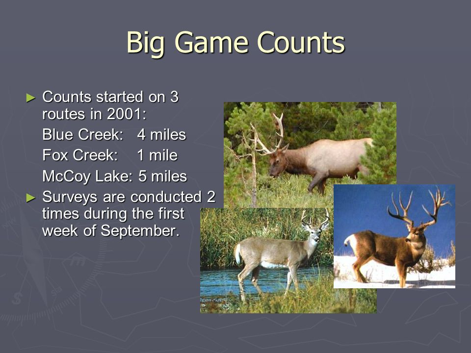 Big Game Counts Counts started on 3 routes in 2001: Blue Creek: 4 miles Fox Creek: 1 mile McCoy Lake: 5 miles Surveys are conducted 2 times during the first week of September.