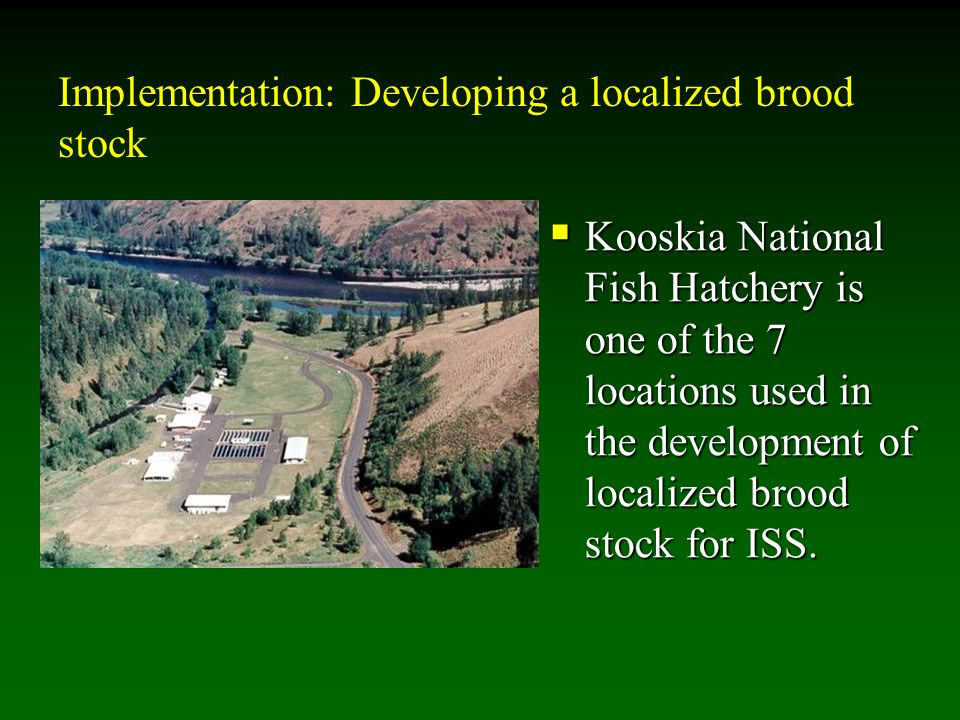 Implementation: Developing a localized brood stock Kooskia National Fish Hatchery is one of the 7 locations used in the development of localized brood stock for ISS.