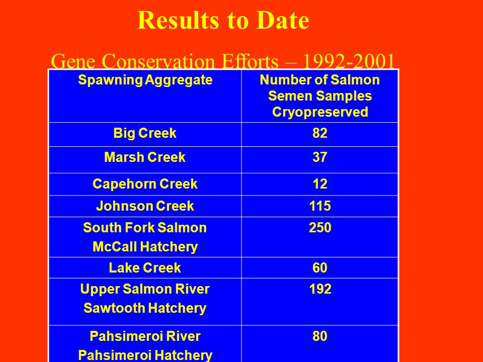 Spawning AggregateNumber of Salmon Semen Samples Cryopreserved Big Creek82 Marsh Creek37 Capehorn Creek12 Johnson Creek115 South Fork Salmon McCall Hatchery 250 Lake Creek60 Upper Salmon River Sawtooth Hatchery 192 Pahsimeroi River Pahsimeroi Hatchery 80 Results to Date Gene Conservation Efforts – 1992-2001