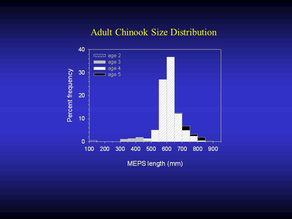 Adult Chinook Size Distribution