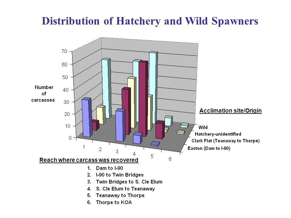 Distribution of Hatchery and Wild Spawners Acclimation site/Origin Reach where carcass was recovered