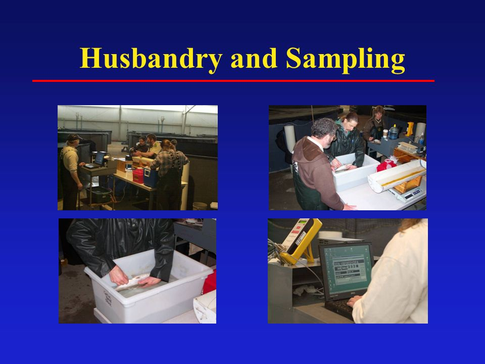 Husbandry and Sampling