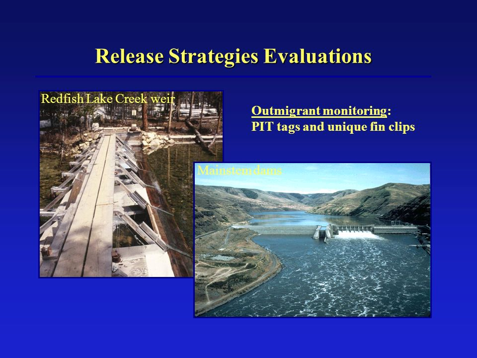 Release Strategies Evaluations Outmigrant monitoring: PIT tags and unique fin clips Redfish Lake Creek weir Mainstem dams