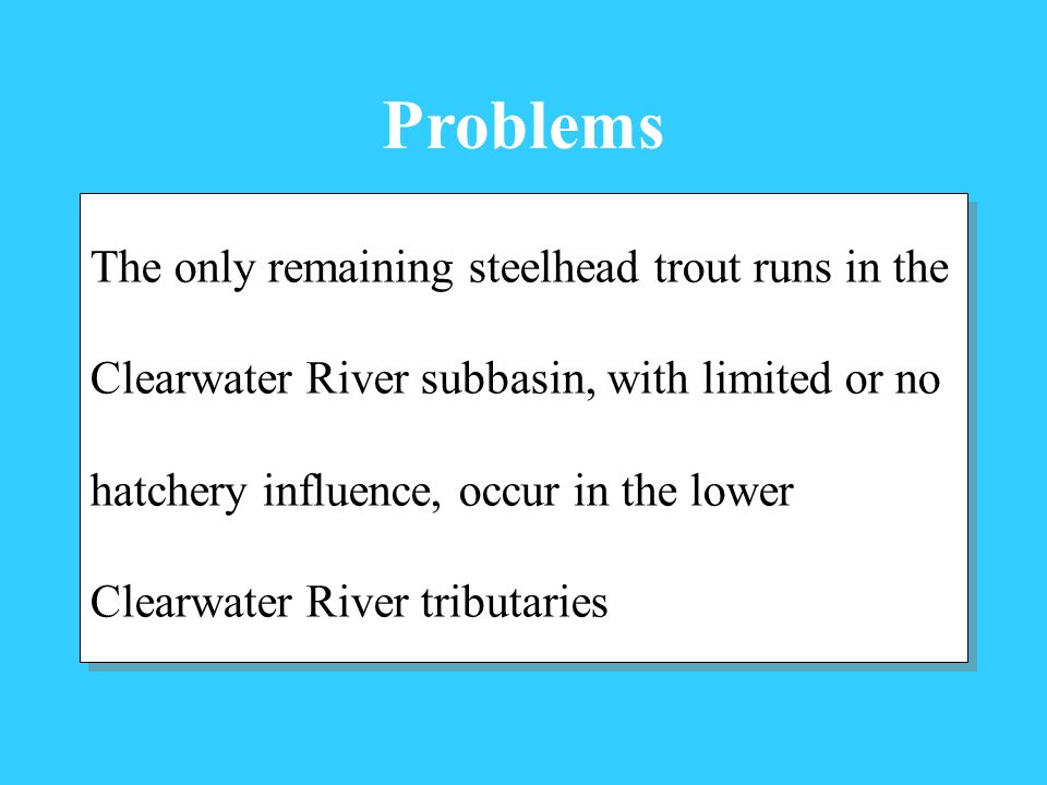 Problems The only remaining steelhead trout runs in the Clearwater River subbasin, with limited or no hatchery influence, occur in the lower Clearwater River tributaries