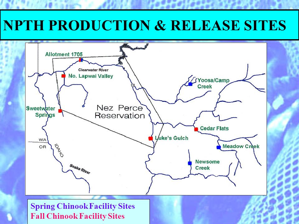 NPTH PRODUCTION & RELEASE SITES Spring Chinook Facility Sites Fall Chinook Facility Sites