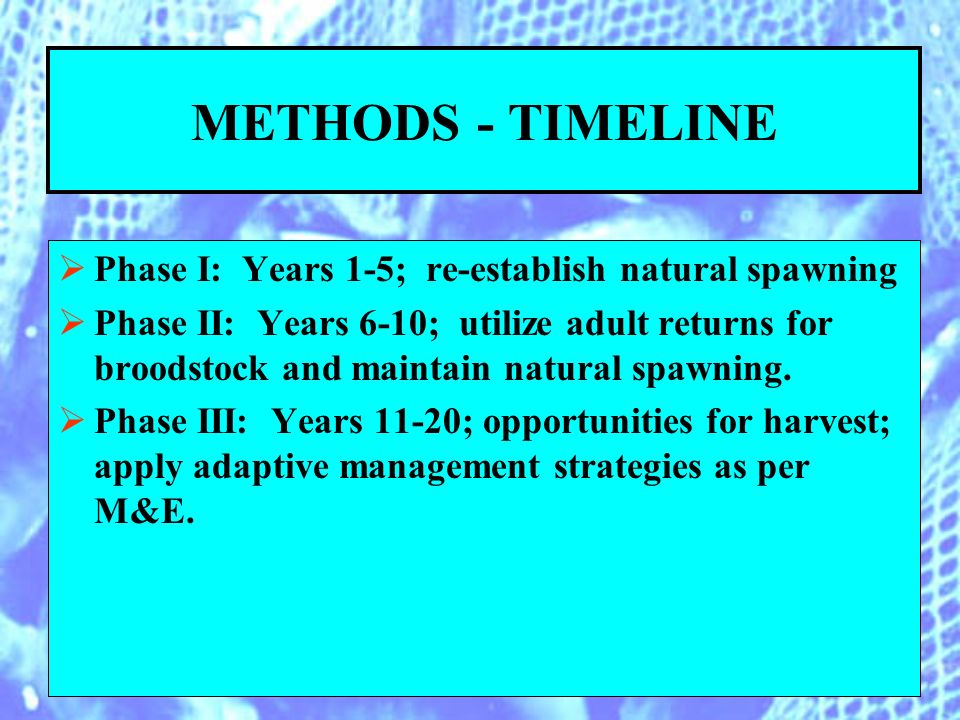 METHODS - TIMELINE Phase I: Years 1-5; re-establish natural spawning Phase II: Years 6-10; utilize adult returns for broodstock and maintain natural spawning.