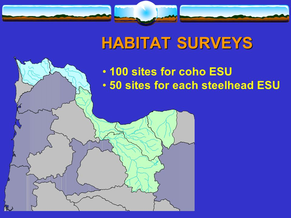 100 sites for coho ESU 50 sites for each steelhead ESU HABITAT SURVEYS