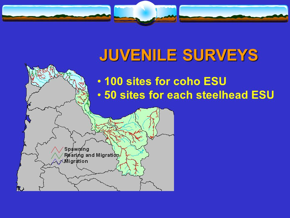 100 sites for coho ESU 50 sites for each steelhead ESU JUVENILE SURVEYS