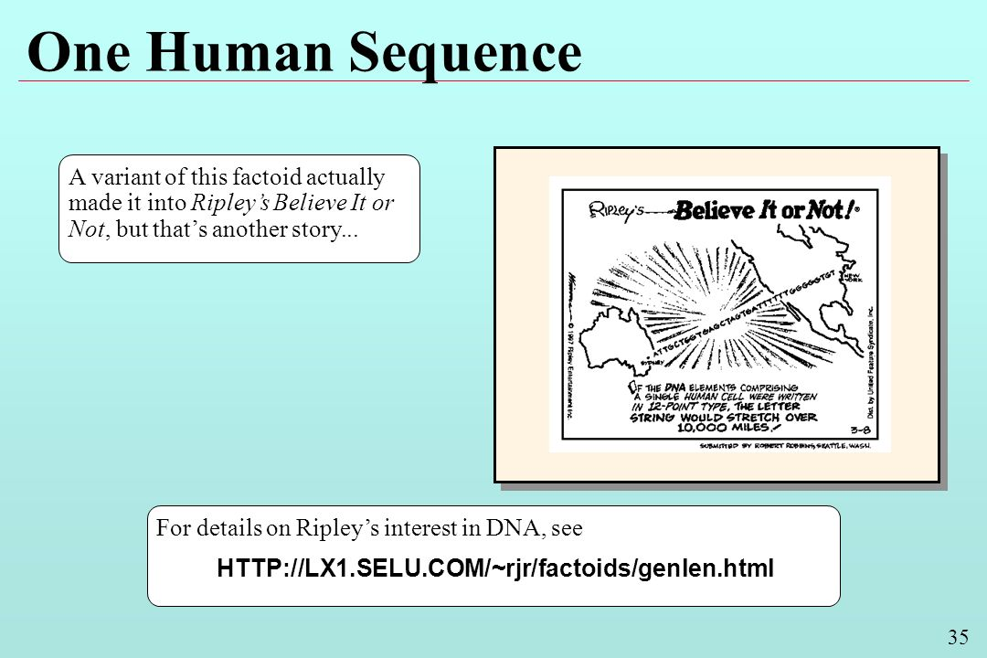 35 One Human Sequence For details on Ripleys interest in DNA, see HTTP://LX1.SELU.COM/~rjr/factoids/genlen.html A variant of this factoid actually made it into Ripleys Believe It or Not, but thats another story...
