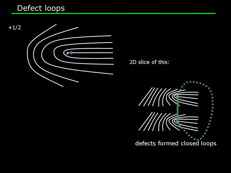 P +1/2 2D slice of this: defects formed closed loops Defect loops