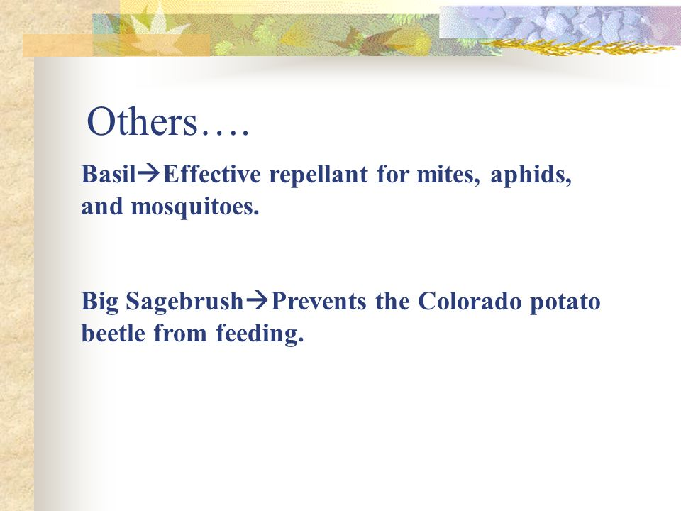 Others…. Basil Effective repellant for mites, aphids, and mosquitoes.