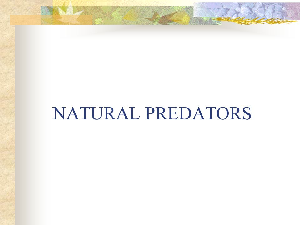 NATURAL PREDATORS