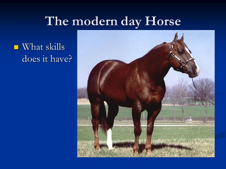 The modern day Horse What skills does it have What skills does it have