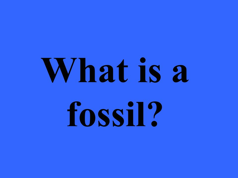 Even though dinosaurs are extinct, fossils have allowed us to learn about how they lived and looked