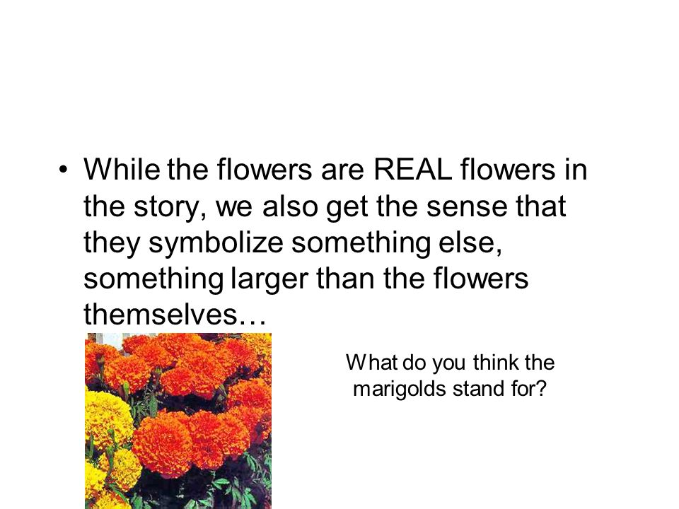 While the flowers are REAL flowers in the story, we also get the sense that they symbolize something else, something larger than the flowers themselves… What do you think the marigolds stand for