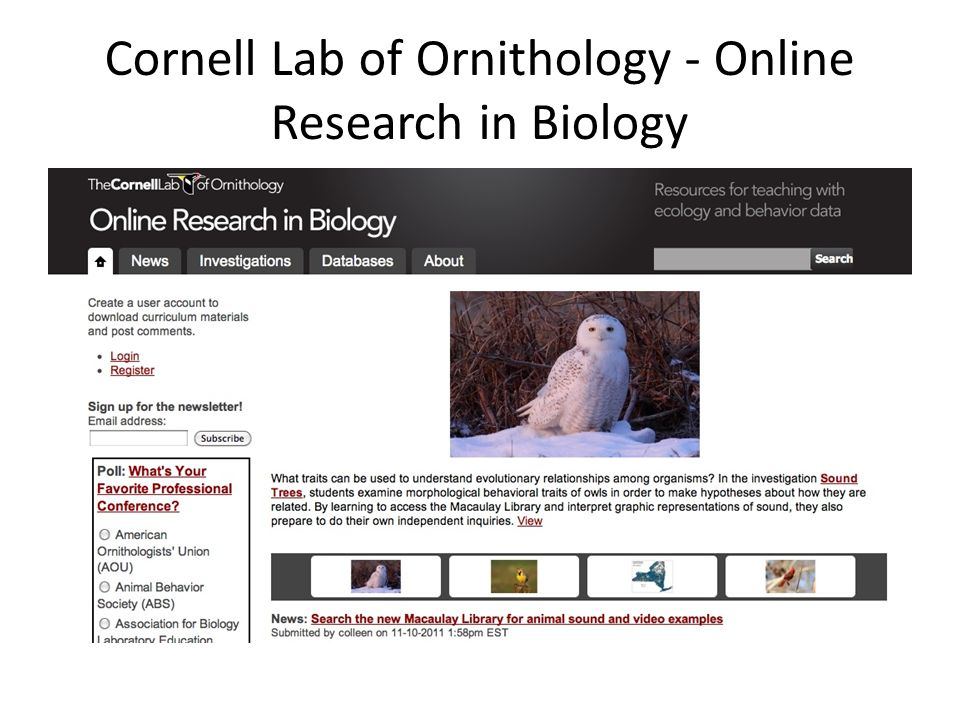 Cornell Lab of Ornithology - Online Research in Biology
