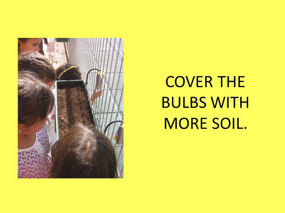 COVER THE BULBS WITH MORE SOIL.