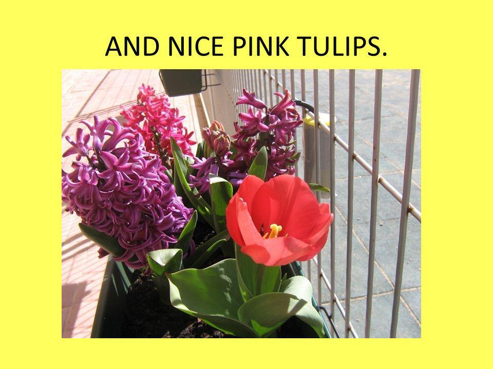 AND NICE PINK TULIPS.