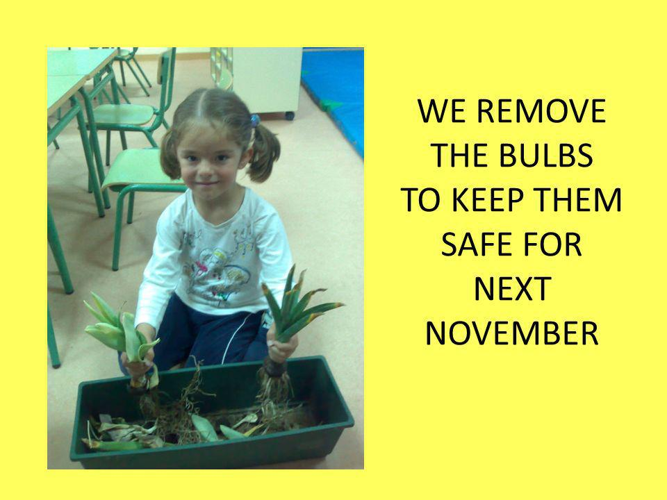WE REMOVE THE BULBS TO KEEP THEM SAFE FOR NEXT NOVEMBER