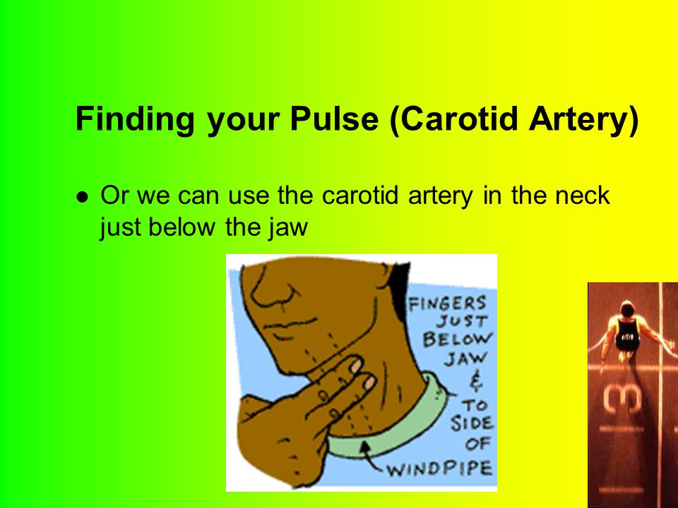 Finding your Pulse (Carotid Artery) Or we can use the carotid artery in the neck just below the jaw