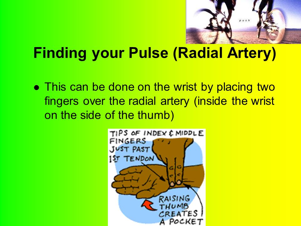 Finding your Pulse (Radial Artery) This can be done on the wrist by placing two fingers over the radial artery (inside the wrist on the side of the thumb)