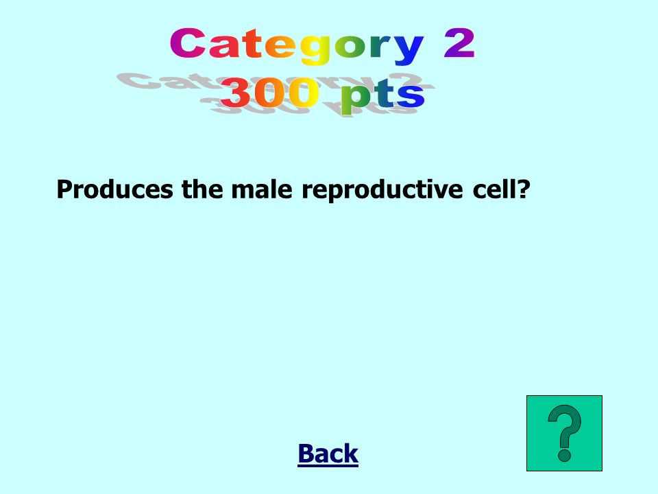 Produces the male reproductive cell Back