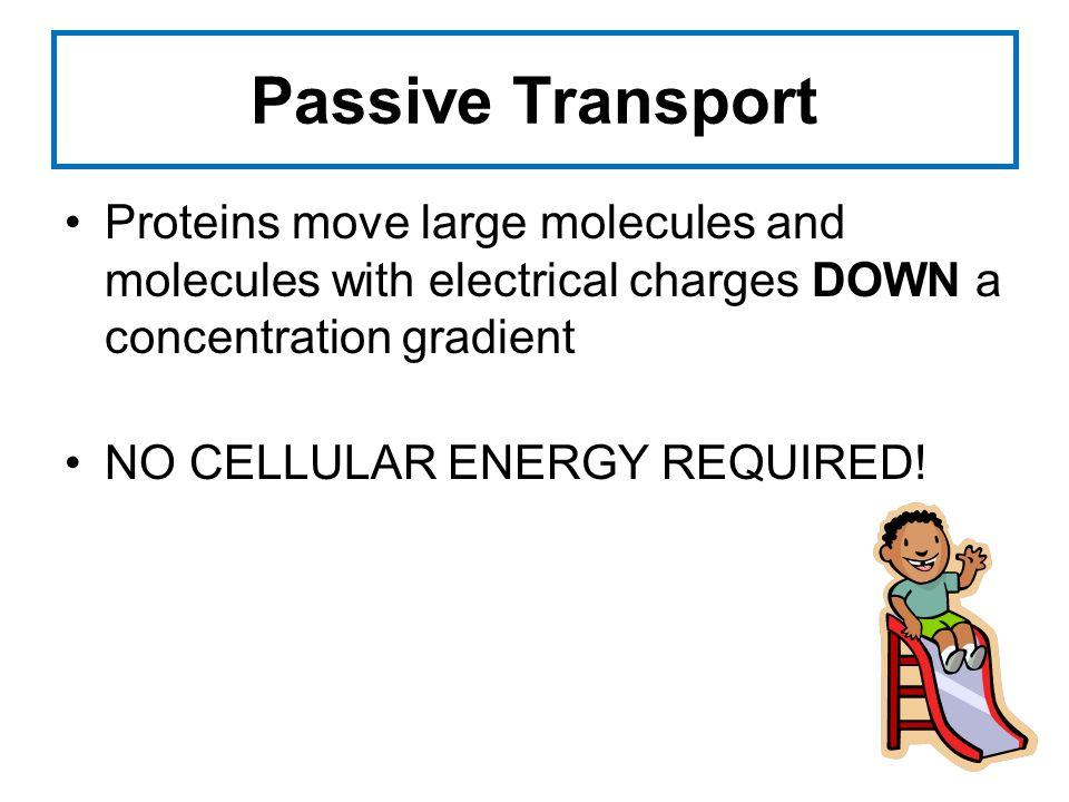 Passive Transport Proteins move large molecules and molecules with electrical charges DOWN a concentration gradient NO CELLULAR ENERGY REQUIRED!