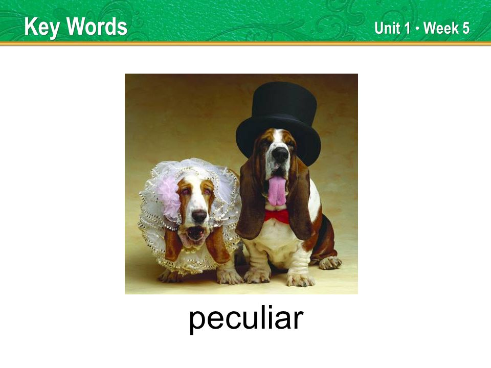 Unit 1 Week 5 peculiar Key Words
