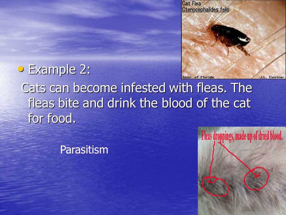 Example 2: Example 2: Cats can become infested with fleas.