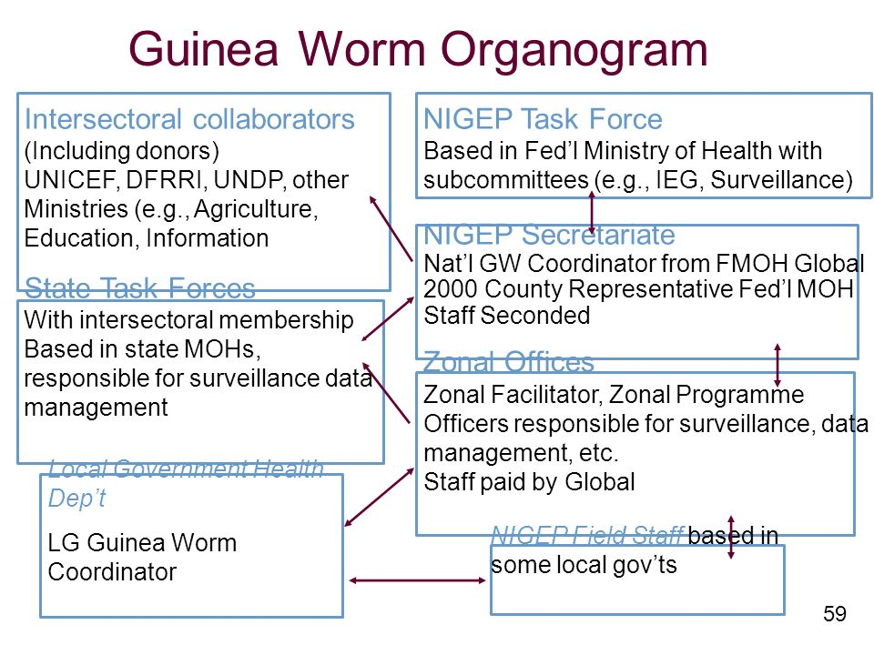 59 Guinea Worm Organogram Intersectoral collaborators (Including donors) UNICEF, DFRRI, UNDP, other Ministries (e.g., Agriculture, Education, Information State Task Forces With intersectoral membership Based in state MOHs, responsible for surveillance data management Local Government Health Dept LG Guinea Worm Coordinator NIGEP Task Force Based in Fedl Ministry of Health with subcommittees (e.g., IEG, Surveillance) NIGEP Secretariate Natl GW Coordinator from FMOH Global 2000 County Representative Fedl MOH Staff Seconded Zonal Offices Zonal Facilitator, Zonal Programme Officers responsible for surveillance, data management, etc.