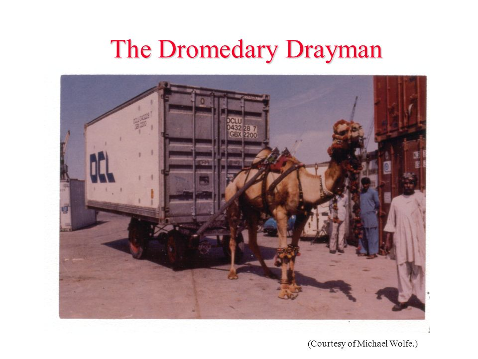 The Dromedary Drayman (Courtesy of Michael Wolfe.)