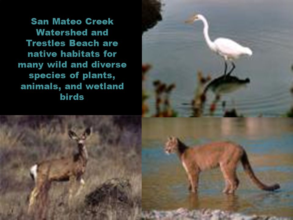 San Mateo Creek Watershed and Trestles Beach are native habitats for many wild and diverse species of plants, animals, and wetland birds