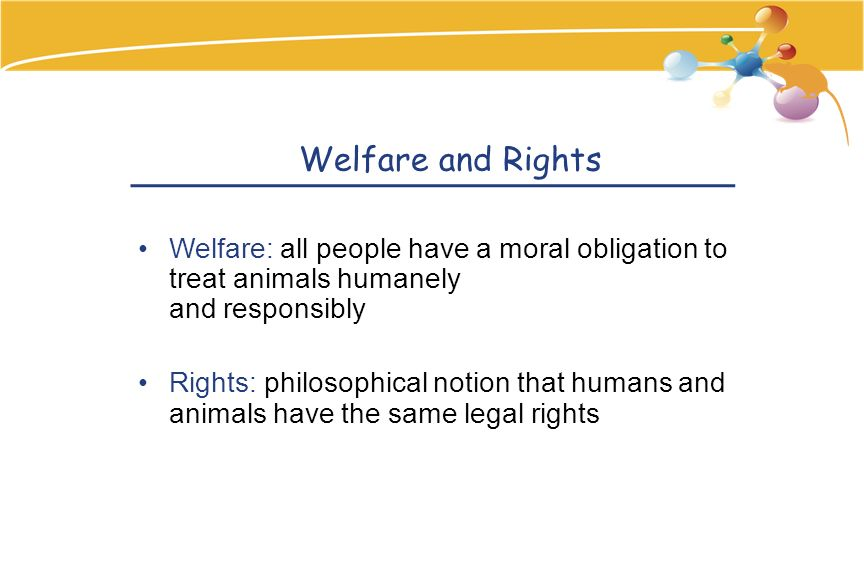 Welfare and Rights Welfare: all people have a moral obligation to treat animals humanely and responsibly Rights: philosophical notion that humans and animals have the same legal rights