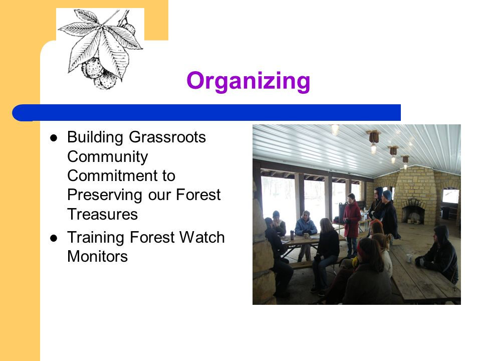 Organizing Building Grassroots Community Commitment to Preserving our Forest Treasures Training Forest Watch Monitors