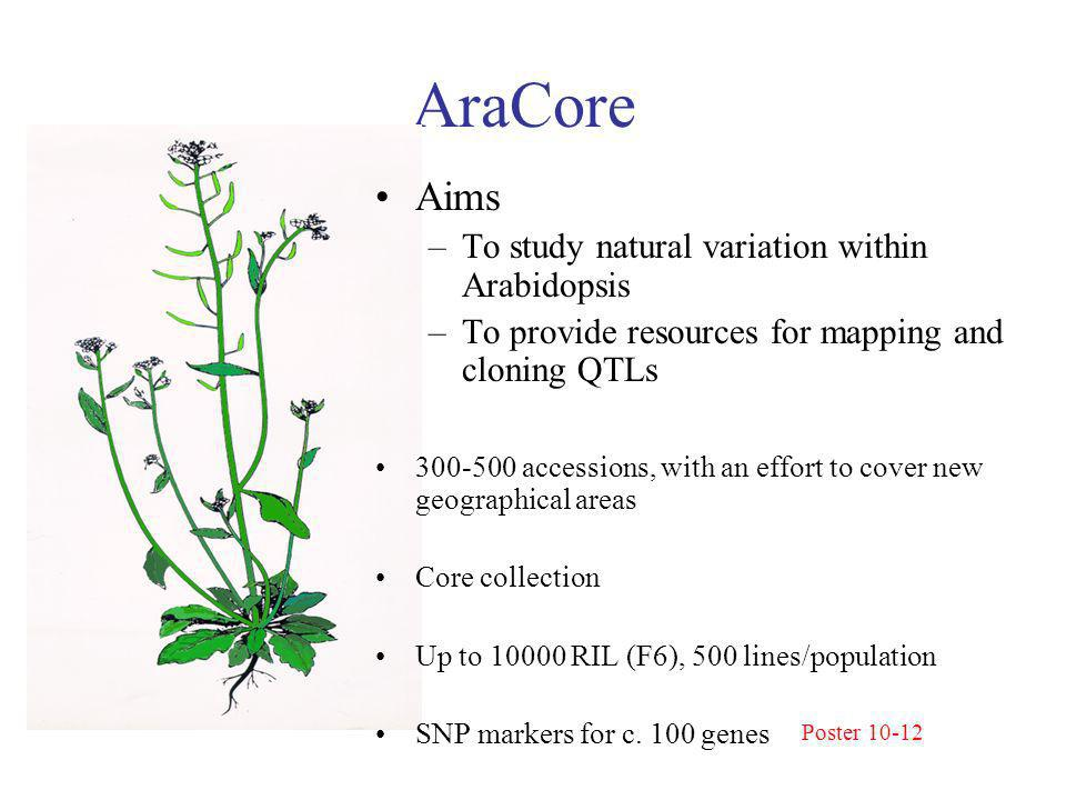 AraCore Aims –To study natural variation within Arabidopsis –To provide resources for mapping and cloning QTLs 300-500 accessions, with an effort to cover new geographical areas Core collection Up to 10000 RIL (F6), 500 lines/population SNP markers for c.