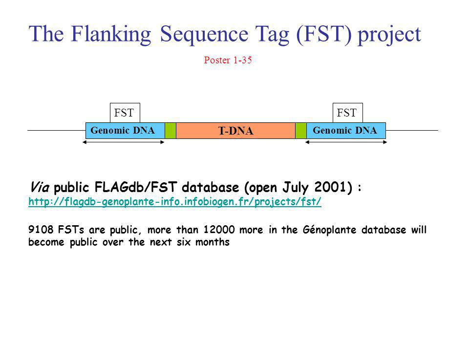 Via public FLAGdb/FST database (open July 2001) : http://flagdb-genoplante-info.infobiogen.fr/projects/fst/ 9108 FSTs are public, more than 12000 more in the Génoplante database will become public over the next six months FST T-DNA Genomic DNA The Flanking Sequence Tag (FST) project Poster 1-35