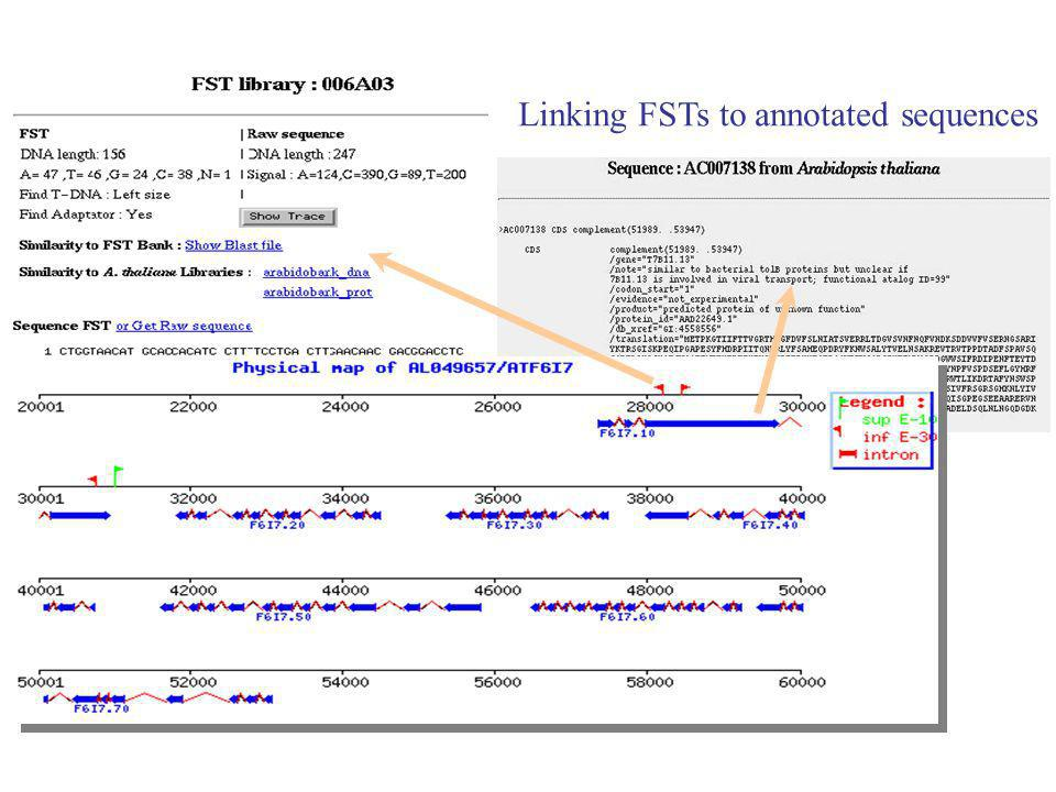 Linking FSTs to annotated sequences