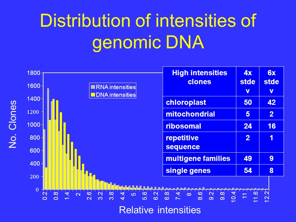 Distribution of intensities of genomic DNA 1400 1600 1800 0.20.81.4 2 2.63.23.84.4 5 5.66.26.87.4 8 8.69.29.8 10.4 11 11.612.2 RNA intensities DNA intensities High intensities clones 4x stde v 6x stde v chloroplast5042 mitochondrial52 ribosomal2416 repetitive sequence 21 multigene families499 single genes548 Relative intensities No.