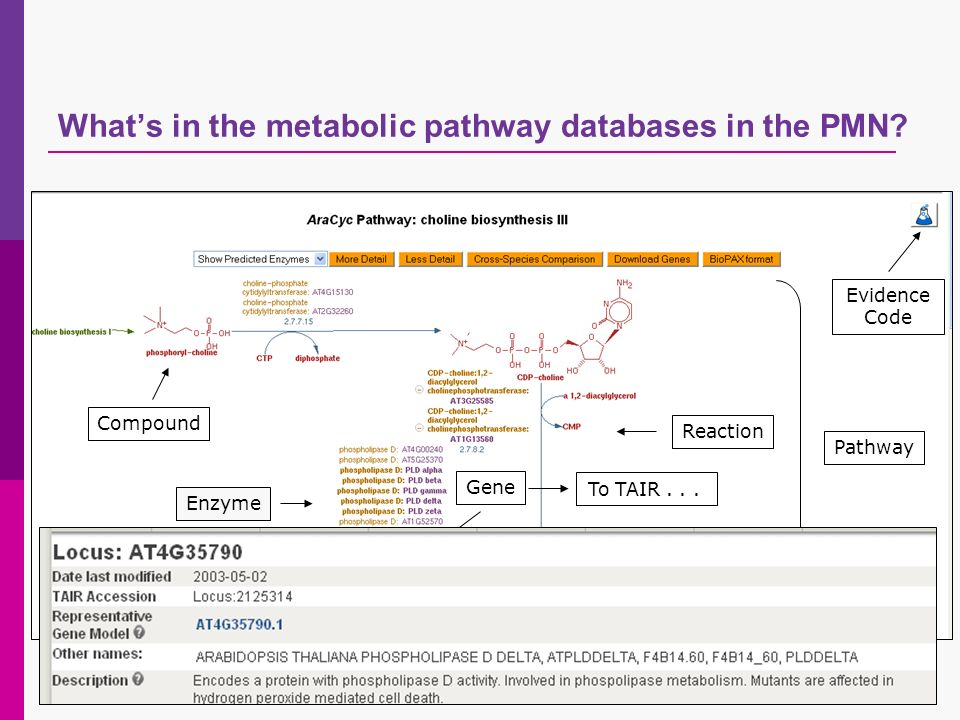 Whats in the metabolic pathway databases in the PMN.