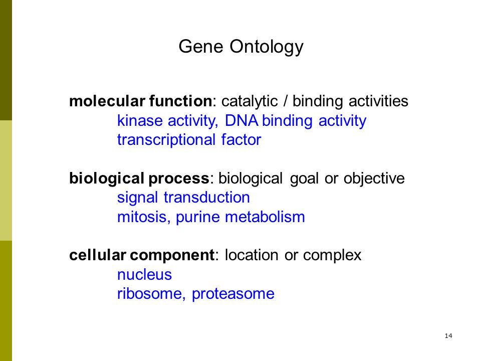 14 molecular function: catalytic / binding activities kinase activity, DNA binding activity transcriptional factor biological process: biological goal or objective signal transduction mitosis, purine metabolism cellular component: location or complex nucleus ribosome, proteasome Gene Ontology