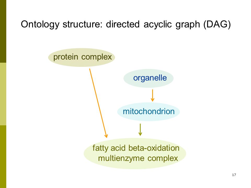 17 protein complex organelle mitochondrion fatty acid beta-oxidation multienzyme complex Ontology structure: directed acyclic graph (DAG)